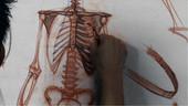 Anatomy Workshop Volume 3
