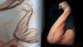 Anatomy Workshop Volume 6