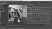 Realistic Dog Grooming for Production with Xgen