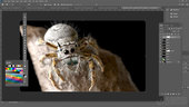 Modeling and Rendering a Realistic Jumping Spider