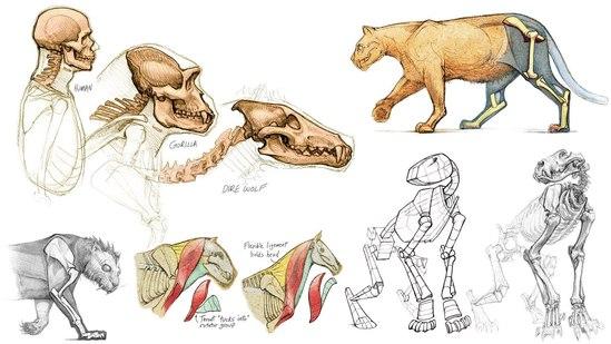 Introduction to Animal Anatomy