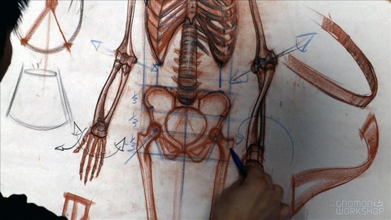 Anatomy Workshop Volume 3
